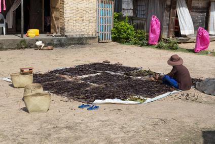 Plantación vainilla